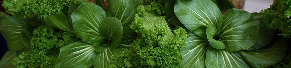 spiral-lettuce